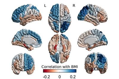 Inheriting Brains Behaviors And BMI